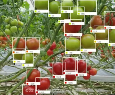 Root AI Ripe Fruit Analysis